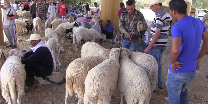ديوان تربية الماشية:'' العيد هذه السنة سيكون إستثنائيا لتوفر المنتوج وتجاوزه معدلات السنوات الفارطة''