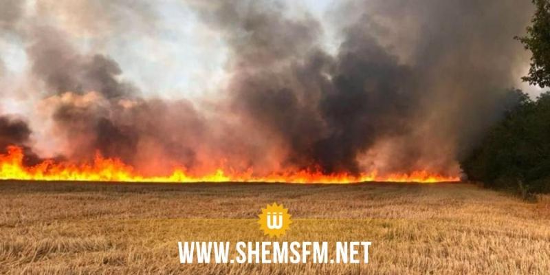 الكاف: السيطرة على حريق أتى على اكثر من 50 هكتار من مزارع الحبوب بمنطقة برج العيفة