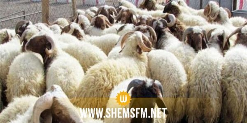 ديوان تربية الماشية: 'اليوم اجتماع لاستكمال متوفرات الأضاحي'