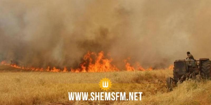 باجة: حريق يأتي على هكتارين من غابة الصنوبر وهكتار من القمح