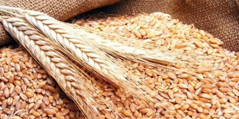 وزارة الفلاحة تنفي توريد شحنة من القمح غير مطابقة للمواصفات