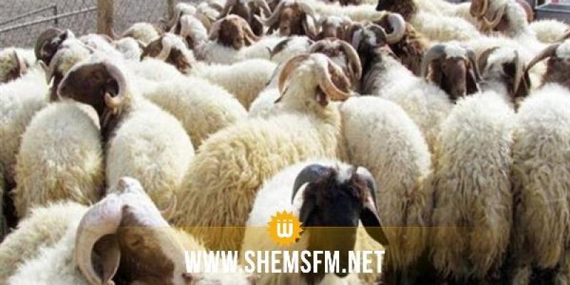 09 جويلية: انطلاق بيع أضاحي العيد بمقر شركة اللحوم
