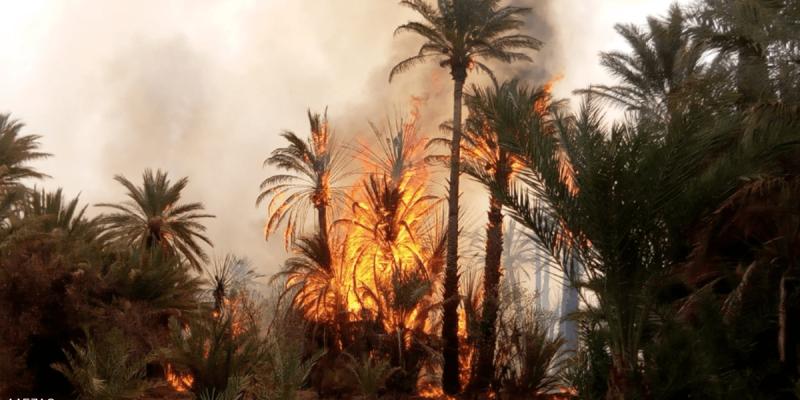 قابس: السيطرة على حريق نشب في غابة ببوشمّة