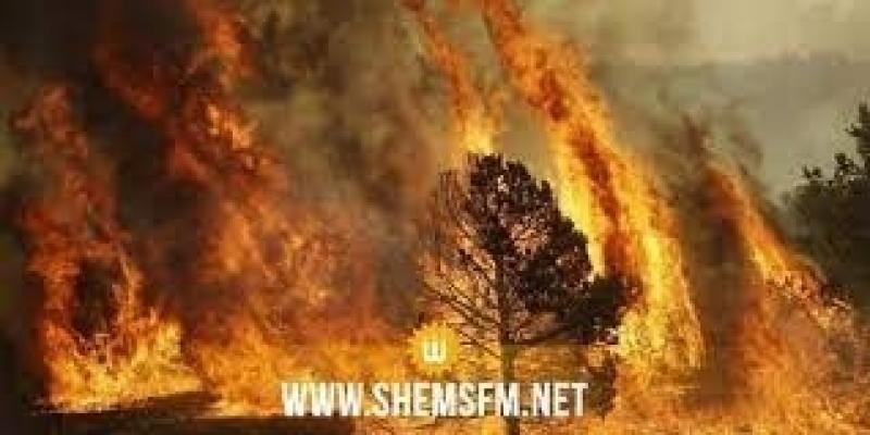 بعد احتراق منازل وسيارات وحيوانات: إجلاء سكان بوعديلة بالكاف جراء حريق تكرونة