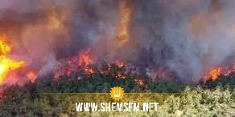 الكاف: حرائق غابات جبل تكرونة تتلف أكثر من ألف هكتار من المساحات الغابية وعشرات المساكن والضيعات الفلاحية