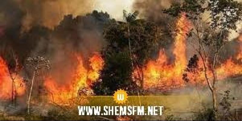 الكاف: تواصل عمليات اخماد الحريق بجبال ورغى وتوقع السيطرة عليه اليوم
