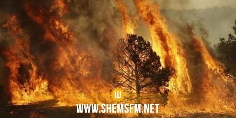 نشب منذ الأمس : السّيطرة على حريق جبل سيدي خلف ببنزرت