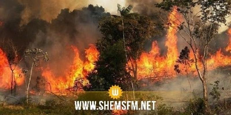 تيبار: حريق هائل يلتهم مساحات شاسعة من غابات الزيتون والأعلاف والأعشاب الجافة