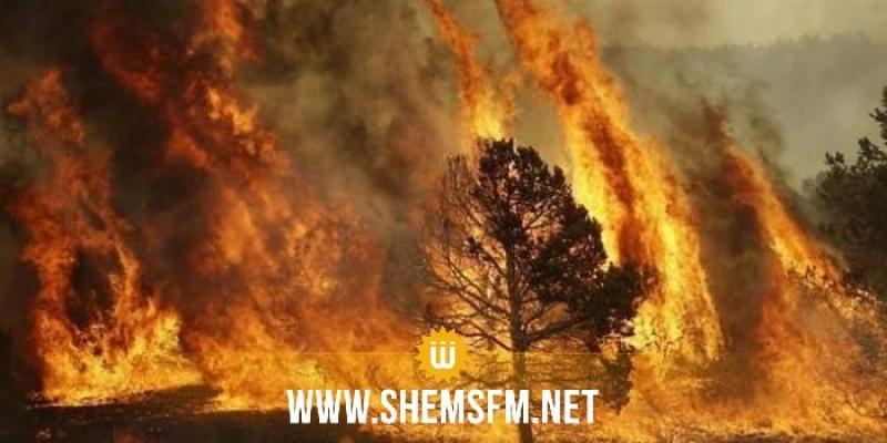 الحماية المدنية : 325 تدخلا يوم الإثنين بينها إطفاء 48 حريقا