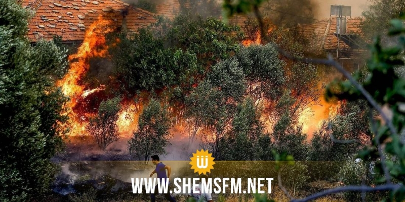 وزارة الفلاحة: التوجه نحو غراسة 2 مليون شجرة بالمناطق التي طالتها الحرائق صيف 2021