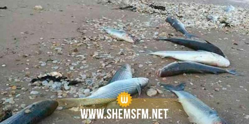 جندوبة:  نفوق أسماك في سدّ بوهرتمة