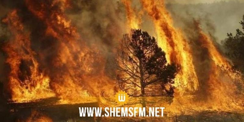 الحماية المدنية: إطفاء 65 حريقا يوم الجمعة