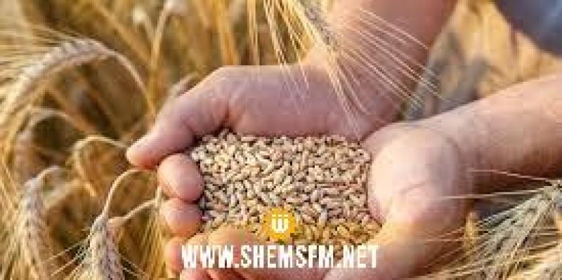 Hausse du prix mensuel de blé à l'international de 12,8% en août