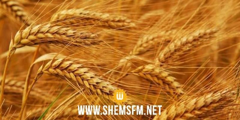ارتفاع بـ12،8% في أسعار القمح دوليا