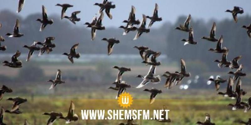 Lancement de la saison de chasse sauvage 2021/2022