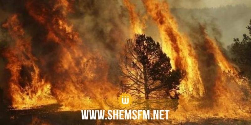الحماية المدنية : إطفاء 42 حريقا أمس الإثنين